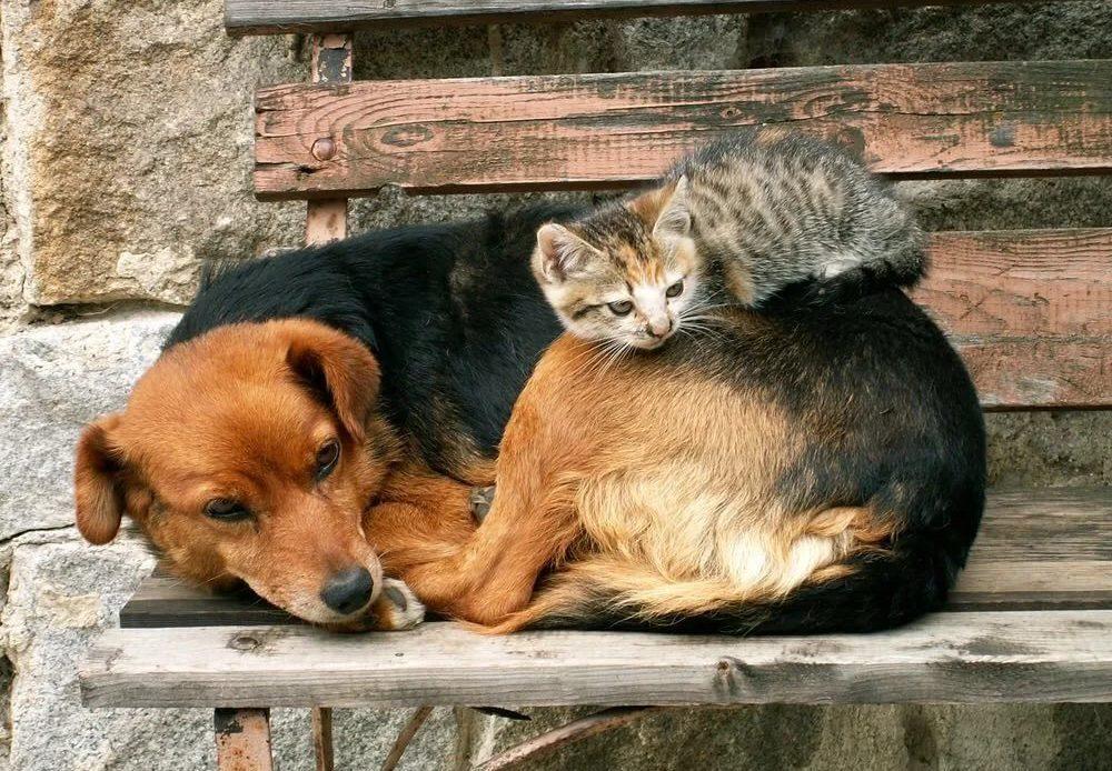 Мэр Саратова предложил ввести лимит на домашних животных