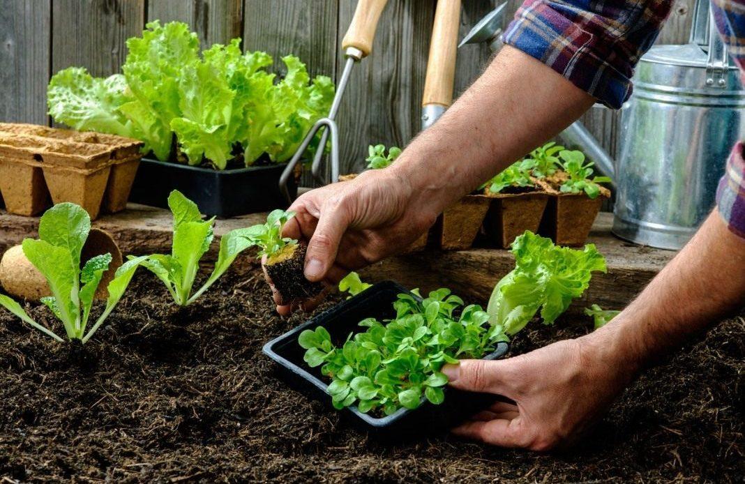 Дома со встроенными огородами могут появиться в России