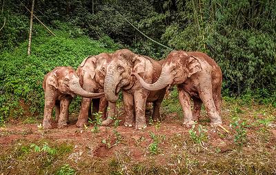 На открытии COP15 в китайском городе Куньмин показали ролик про диких азиатских слонов
